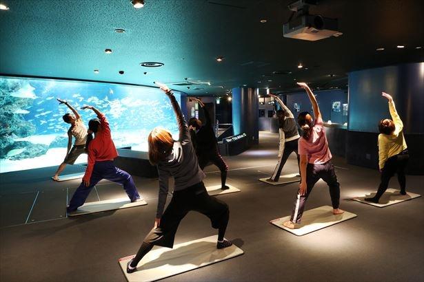サンシャイン水族館にて、ヨガレッスン「海の中の水族館ヨガ」が、2月21日(水)と3月14日(水)に開催される