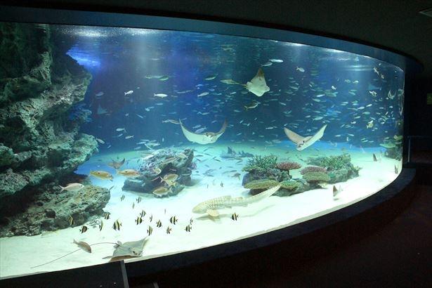 【写真を見る】サンシャイン水族館の大水槽の前でヨガ!心も体もリフレッシュ!