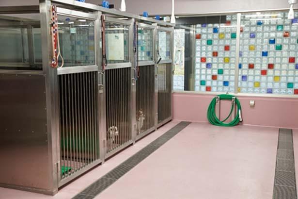 【写真を見る】保護された犬の様子がわかる見学者コース/大阪府動物愛護管理センター