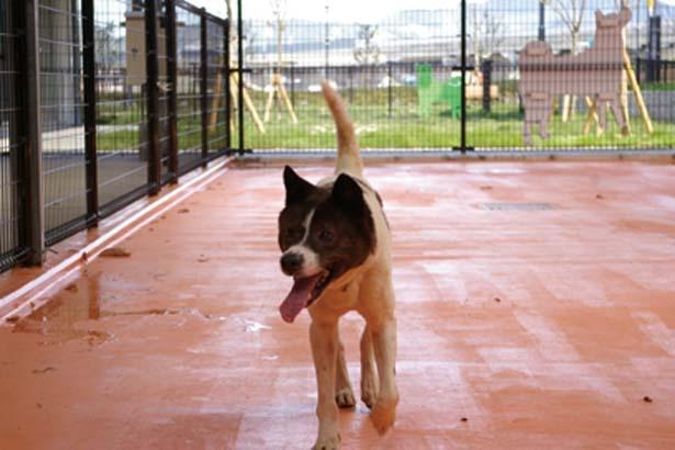 保護犬がストレスをためないよう専用の運動場も完備/大阪府動物愛護管理センター