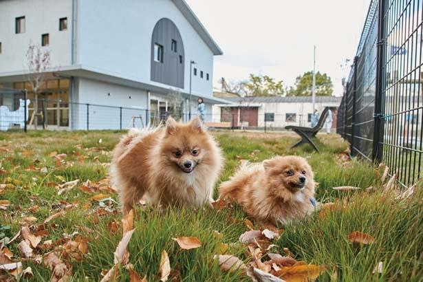 犬の飼い方教室も実施/大阪府動物愛護管理センター