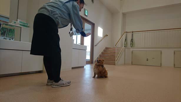 犬と接して、かかわり方や飼い方を教える/大阪府動物愛護管理センター