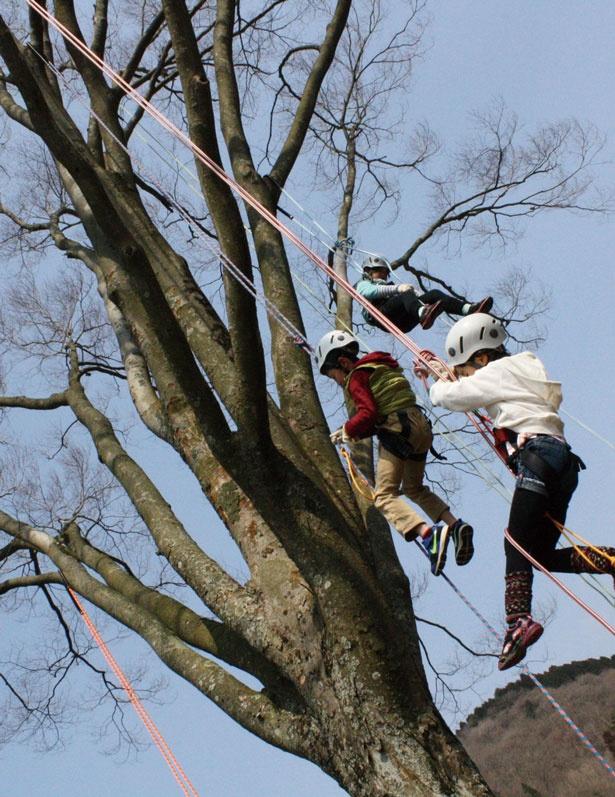 【写真を見る】ロープを使って安全に木登りを楽しめる自然体験プログラム「ツリーイング」¥2,000。コツをつかめば大きな木でも簡単に登れる。