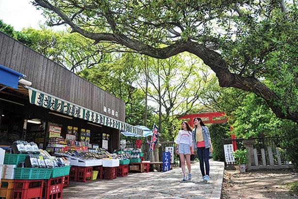淡嶋神社への参道には3軒のみやげ物店&お食事処が並ぶ。魚介などを焼く香ばしさがたまらない