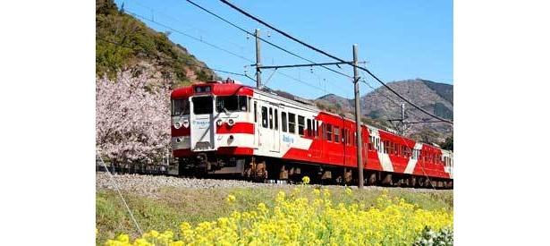 東と南伊豆への観光アクセスにはずせないリゾート列車