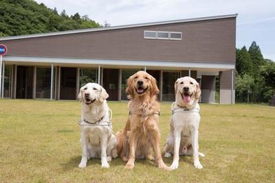 視覚障害者をサポートするために訓練された犬/公益財団法人関西盲導犬協会