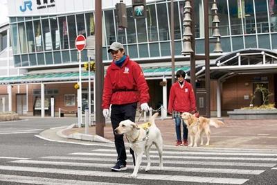 盲導犬の誘導訓練/公益財団法人関西盲導犬協会