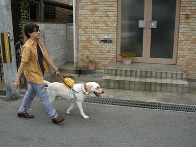 盲導犬の引退は10歳/公益財団法人関西盲導犬協会