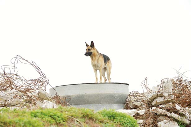 災害で行方不明になっている人を捜索するために特別に訓練された犬/日本レスキュー協会
