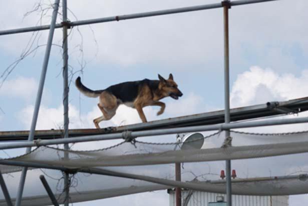 高所訓練や障害物訓練ができるタワーなどを設置/日本レスキュー協会