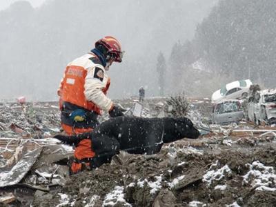 東日本大震災時は救助隊の一員として災害救助犬の存在が認められた/日本レスキュー協会