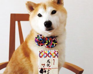 柴田すばる(推定11歳オス)柴犬/和詩倶楽部 本店