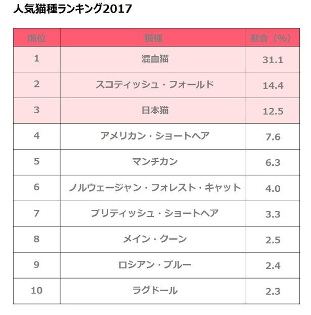 人気猫種TOP10