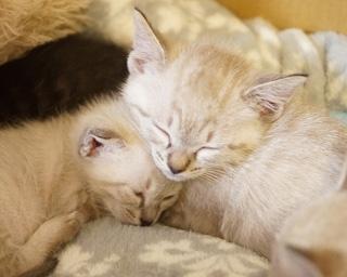 """冬こそ猫に萌え萌え♪今年最初の「ねこ休み展」は猫づくしの""""ニャイト""""パーティーを開催"""