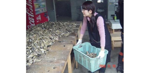 牡蠣を入れた大きなカゴ