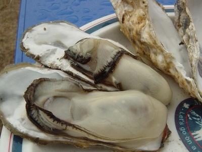 この牡蠣でこぶり?