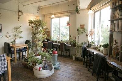 窓からは靱公園の緑/cocoo café