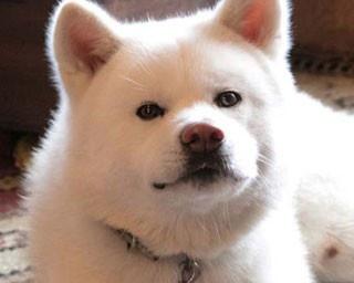 【看板犬】もふもふ&ぶちゃかわ&かっこいい~!最強の癒しわんこがいるお店7選