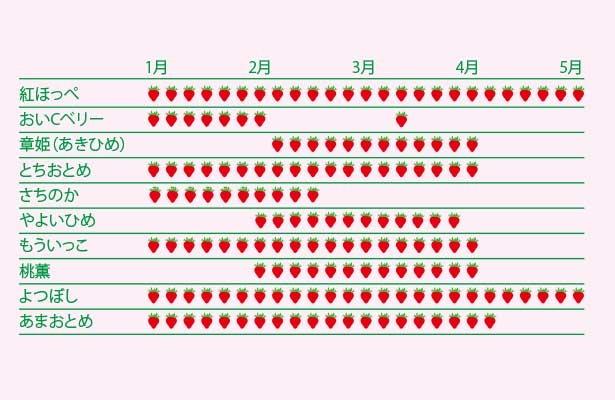 【種類別】いちごの旬カレンダー。天候によって、ずれる場合もあるので注意
