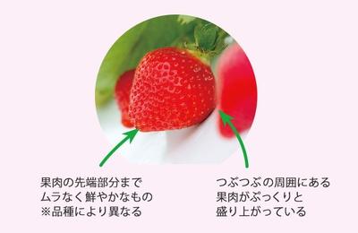 いちごのつぶつぶは、種ではなく果実。赤くて甘い部分は茎で、花の根元(花托/かたく)の茎の先が果実のように大きくなった部分で「偽果」と呼ばれている