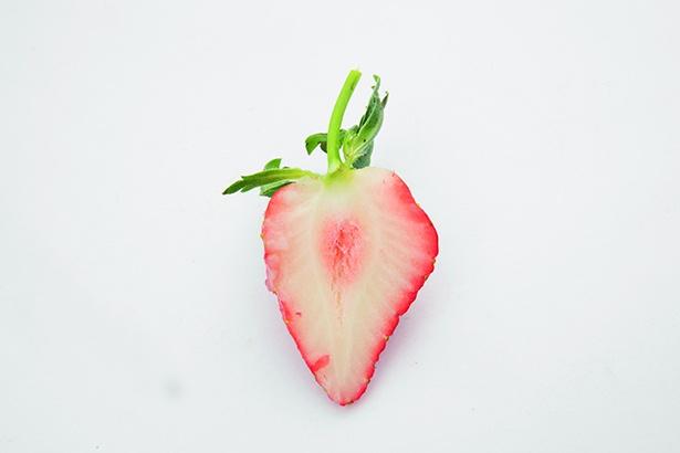 【写真を見る】表面は真っ赤だが、中は意外に白いのが特徴の「恋みのり」