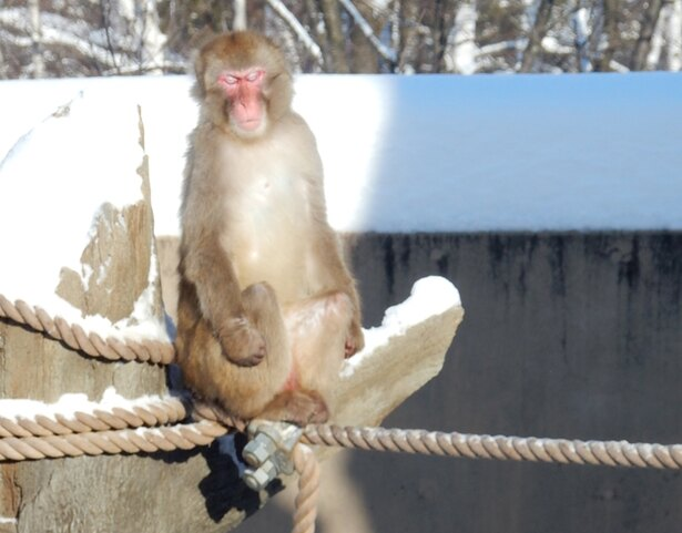 旭山動物園/日光浴をしているサル