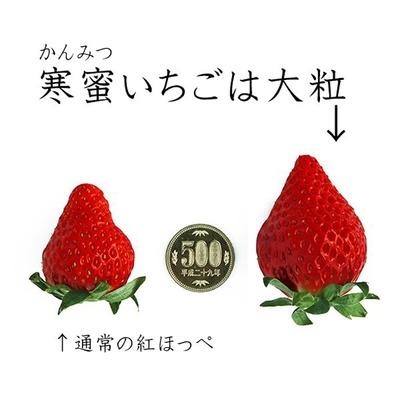 通常のイチゴと比べてこの大きさ!