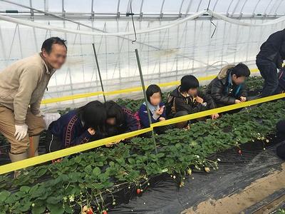 【写真を見る】高さの低い土耕栽培なので、子供でも摘み取りやすい
