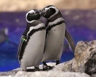 今年のバレンタインはすみだ水族館で、ペンギンカップルと過ごそう