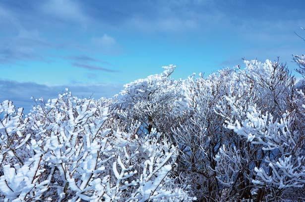 希少な樹氷は、まるで花のよう!/御在所 ロープウエイ