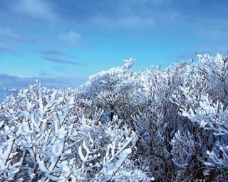 雪景色から満開の梅園まで!美しすぎる絶景5選〈三重〉