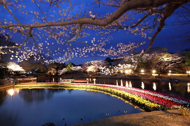 夜風にあたりながら桜並木を散策するのも気持ちいい