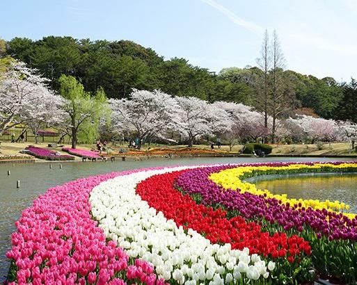 開花時期の異なる桜とチューリップを同時に見られる春の名所