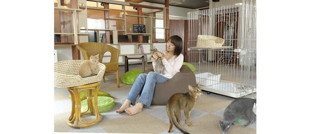 ネコと遊ぶスペースは約20人収容。飲食席とはガラスで仕切られている。ペット同伴不可