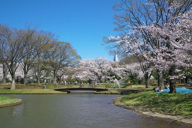 春になれば満開の桜の下でお花見も楽しめる