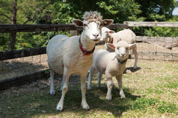 動物ふれあい牧場では「エサやり体験」(100円から)も/道の駅 丹後王国「食のみやこ」