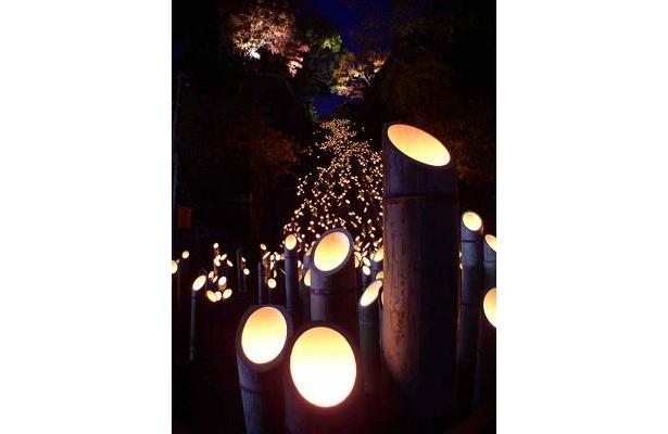 1800本の灯籠が並ぶ広瀬神社