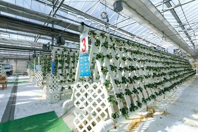 7段ある多段式水耕栽培もある/道の駅 針テラス