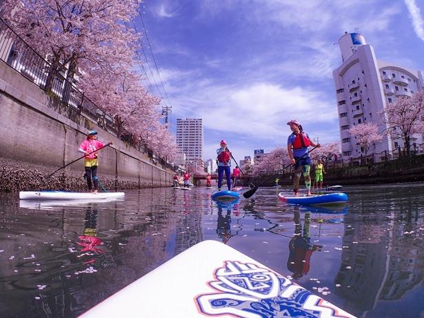 桜の開花に合わせて毎年開催。集合は大岡川の桜浅橋、仲間と水上散歩を楽しもう!