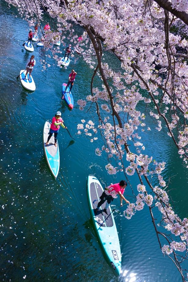 【写真を見る】サクラの開花に合わせて毎年開催する「大岡川桜SUPクルーズ」