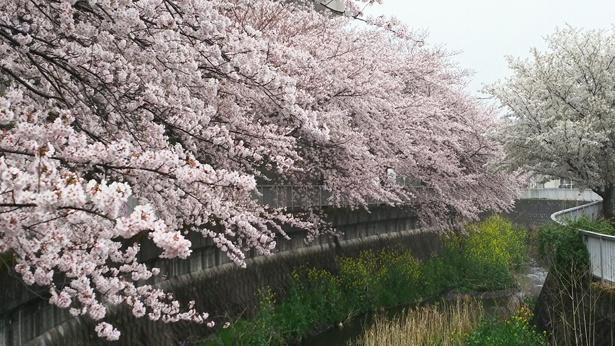 緑と水、大自然に囲まれて清々しい空気の中でお花見を満喫しよう