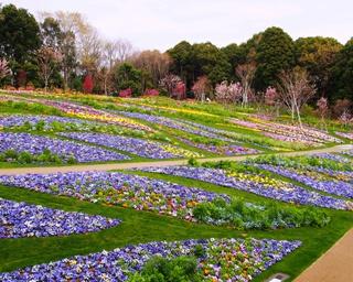 横浜が美しい花と緑であふれる~ガーデンネックレス横浜 2018~ 3月24日(土)から開催!