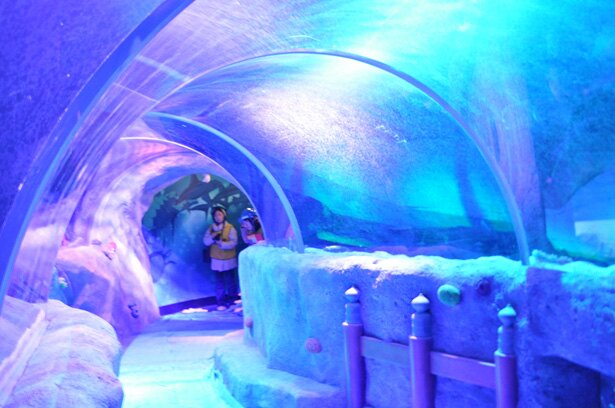 【写真を見る】さまざまな色に変化する 水中トンネル/シーライフ名古屋・竜宮城エリア