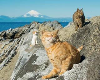 看板ネコに会いに行こう!三浦&江の島の癒しカフェ
