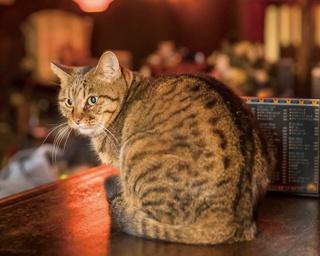 ネコの日に会いたい! キュートな看板ネコがお出迎えの横浜のバー&カフェ