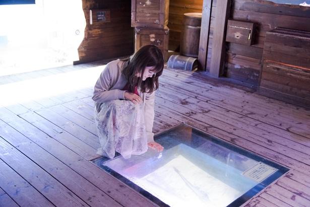 「南知多ビーチランド」の探検アクアリウム、レックダイブを見学中。「下にも生き物がいるよ!」(樋口)