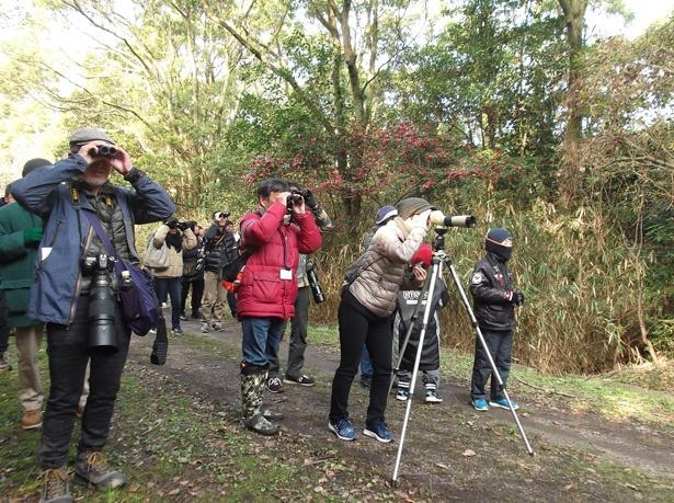 「愛知県弥富野鳥園」(愛知県弥富市)では探鳥会、ミニ探鳥会がそれぞれ年10回ずつ行われる