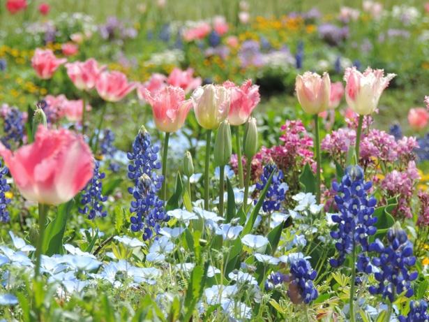 四季折々の草花が楽しめる/名古屋港ワイルドフラワーガーデン・ブルーボネット