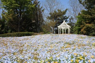 「ワイルドフラワーの里」では、おとぎ話にでてきそうな花畑が楽しめる/名古屋港ワイルドフラワーガーデン・ブルーボネット