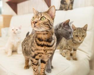 ネコの日に行きたい! 横浜市内のネコカフェで癒されまくり